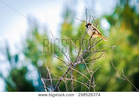 A Bird Standing On The Branch Of A Tree