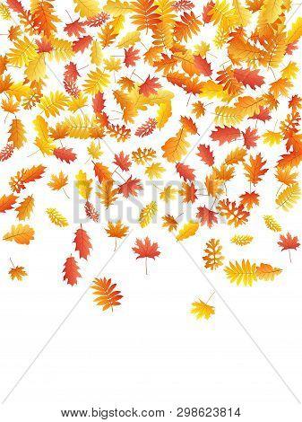 Oak, Maple, Wild Ash Rowan Leaves Vector, Autumn Foliage On White Background. Red Orange Yellow Rowa