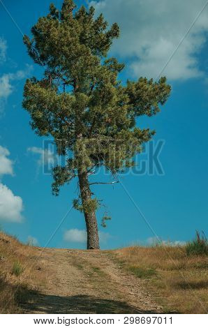 Big Tree At The End Of Dirt Road Passing Through Hilly Terrain, In A Sunny Day At The Highlands Of S