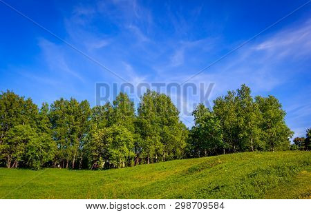 Green Summer Park. Park In Clear Weather. Sunny Day In A City Park