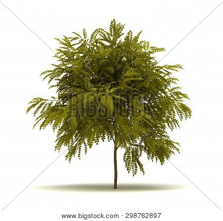 Single Robinia Pseudoacacia Tree. Isolated On White Background 3d Rendering