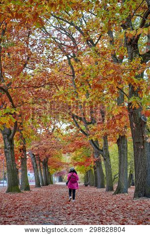 Woman Walking Among Colorful Red And Yellow Foliage Trees In Garden During Autumn At Wilhelm Külz Pa