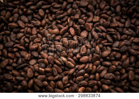 Cocoa Beans And Cocoa Fruit On The Cocoa Concept With Raw Materials Aromatic Cocoa Beans As Backgrou