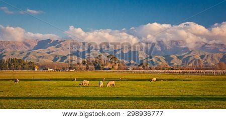 Green Hills In Countryside Of Malborough Region In New Zealand