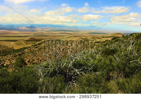 Chaparral Plants On A Hillside Overlooking The Antelope Valley Taken At Arid Badlands In The Rural S