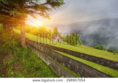 Pine Forest By The Road Through Hillside Meadow In High Mountains In Sunset Light