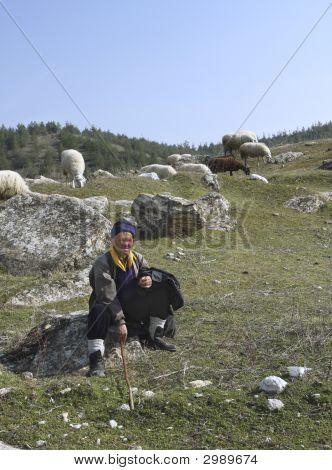 Nomad Sheepherder
