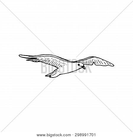Hovering Gull Bird With Outspread Wings, Ink Pen Sketch, The Common Soaring Seagull Mew Gull,