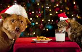 Cat and Dog eating and drinking Santa's cookies and milk. poster