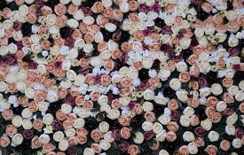 Wall With Different Flowers. Colorful Blooming Ecological Landscape Nature. Backgrounds, Textures, W