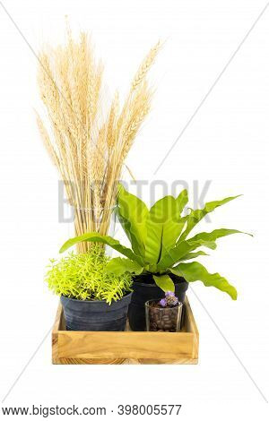 Blossoming Flower In Wooden Pot Box. Plant Decoration Of Urban City Street Isolate On White Backgrou
