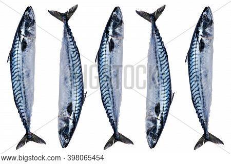 Set Mackerel Fish Isolated On White Background. Frozen Fish. Iced Atlantic Fish. Mackerel. Mackerel