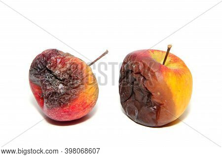 Two Rotten And Uneatable Apples. Isolated On A White Background.