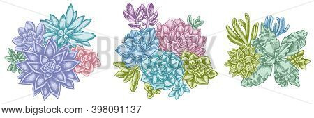 Flower Bouquet Of Pastel Succulent Echeveria, Succulent Echeveria, Succulent Stock Illustration