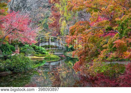 Stunning Fall Colors In The Fort Worth Botanic Garden