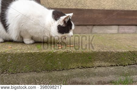 Black And White Stray Cat Eat Dry Food On Pavement.