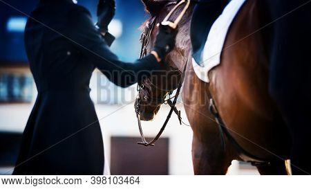 A Rider In A Dark Suit And Gloves Adjusts The Stirrup On The Saddle, Put On A Strong Bay Horse. Eque