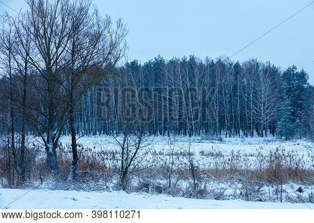 Winter Landscape With Birch Grove. Winter Rural Landscape