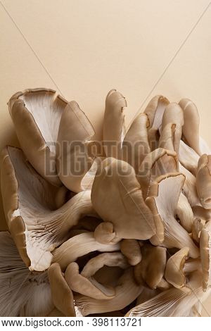A Cluster Of Oyster Mushrooms With Their Fleshy Caps, Gills And Stipes On A Light Ocher Background.
