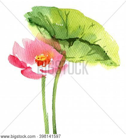 Watercolor Painted Illustration Of Water Lily Lotus In Bloom. Pink Flowers And Big Green Leaves. Ori