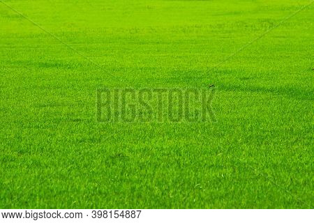 Golf Sport Nature Green Fresh Grass In The Field Background