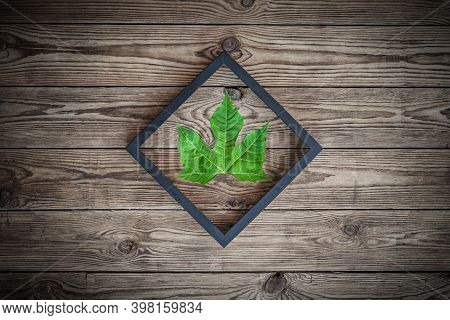 Green Leaf In Wooden Frame Over Old Wooden Texture Background. Top View.