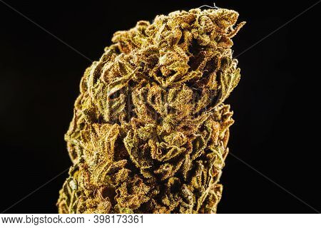 Medical Marijuana Bud. Cannabis Flower Strain. Indica, Sativa, Hybrid. Weed Flower. Pictures For Dis