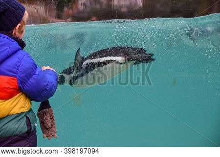 Child At The Zoo A Young Boy Watches Penguins Swim Underwater
