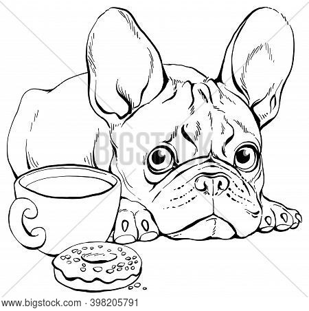 Vector Illustration. Contour Portrait Of A Cute French Bulldog. Can Be Used For Coloring.