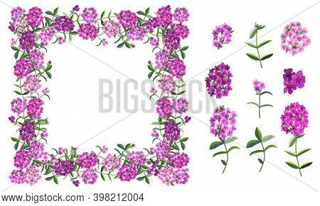Vector Flower Set With Different Phloxes On White.