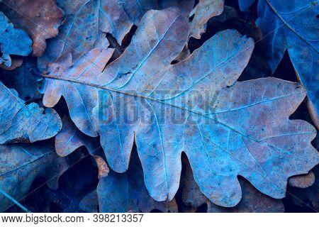 frozen oak leafag on ground - anstract natural nackground