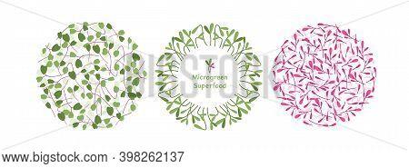 Cartoon Eco Logo Decoration Elements Collection With Mustard Sunflower Arugula Orach Herb Leaf, Gree