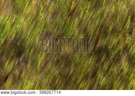 Uk, Yorkshire - Nov 2020: Intentional Camera Movement (icm) - Following Rain The Forest