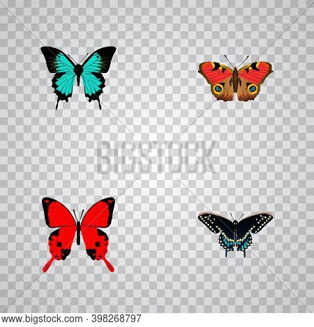 Set Of Beauty Realistic Symbols With Hairstreak, Precis Almana, And Other Icons For Your Web Mobile