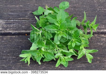 Heap Of Fresh, Green, Aromatic, Just Harvested Oregano, On Old Oak Wooden Table, View From Above