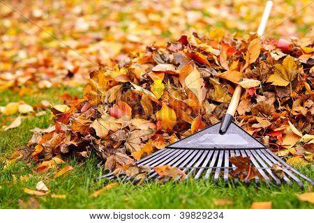 Folhas de outono com ancinho