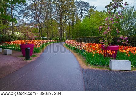 Admirable Spring Park Scenery, Popular Keukenhof Garden With Blooming Various Fresh Colorful Spring