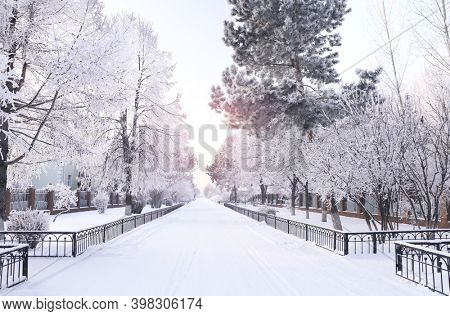 Evening winter landscape with a road and trees covered with snow, Russia. Road in a russian village in winter