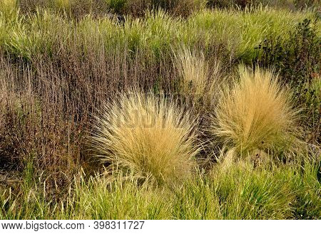Decorative Tufts, Which He Creates From Narrow, Deep Green Leaves, Above Which Creamy White Laths Wi