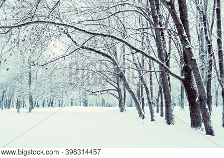 Winter landscape, snowy winter city park in cloudy day, winter forest park in bw tones, winter natural landscape, winter snowy trees in the winter park, winter natural scene