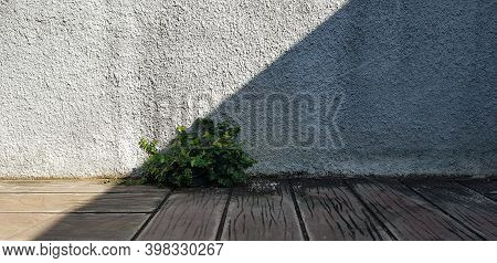 Tree With Light And Shadows On A White Concrete Wall Texture For Background. Nature Shadows Art On W