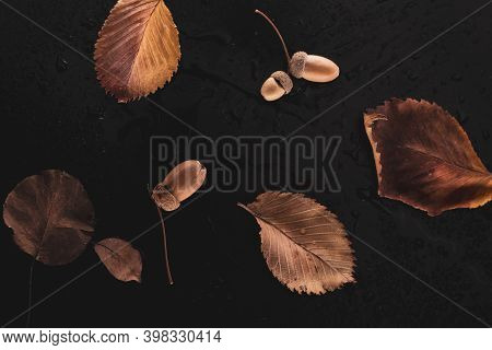 Autumn Dry Leaves On A Black Background