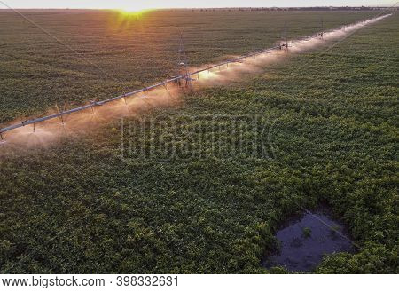Morning Watering The Field With Soybean Crops. Sunlight Illuminates The Water Droplets And The Irrig