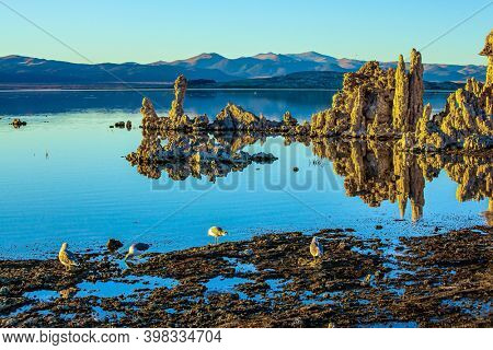 Colonies of various birds live on the shores of the lake Mono. Magic sunrise on the lake. Mono Lake is a salt lake in California. The natural wonder of the world