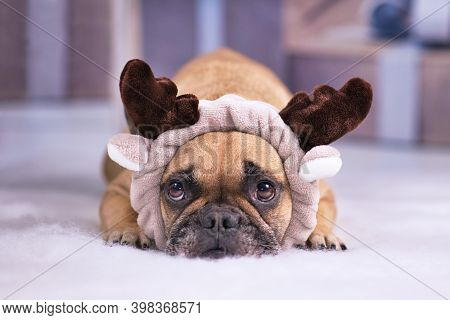 Cute Fawn French Bulldog Dog Dressed Up With Christmas Reindeer Costume Headband With Antlers Lying
