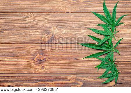 Cannabis Leaf Weed Ganja Green Hemp Leaves On Dark Brown Wooden Background With Copy Space. Medical