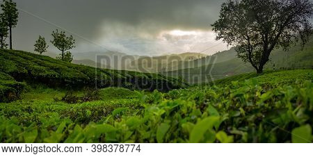 Munnar Tea Plantation Panorama View . Sunset Over Tea Plantations In Munnar, Kerala, India.
