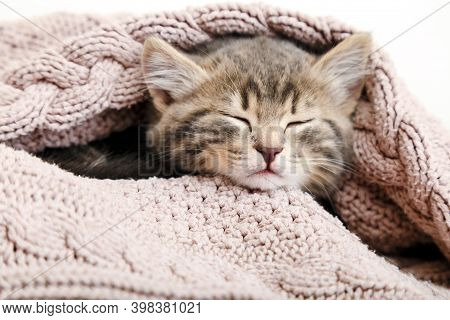 Portrait Baby Cat Sleeping On Cozy Pink Blanket. Fluffy Tabby Kitten Snoozing Comfortably On Knitted