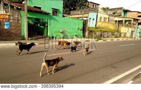 Mata De Sao Joao, Bahia, Brazil - November 7, 2020: Dogs Are Seen On The Street In Search Of A Femal
