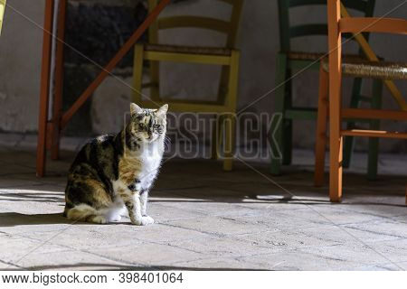 Domestic Cat Outside Sunlight. Colored Tables And Chairs Background. Copy Space.